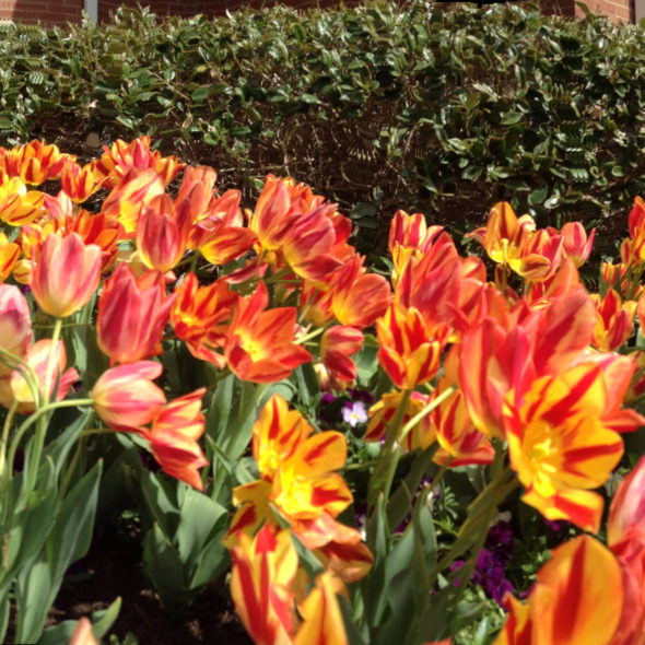 jim west central church collierville tn spring blooms
